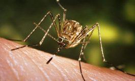 Hoardele de țânțari au punctat: un gălățean este primul român care s-a îmbolnăvit de West Nile