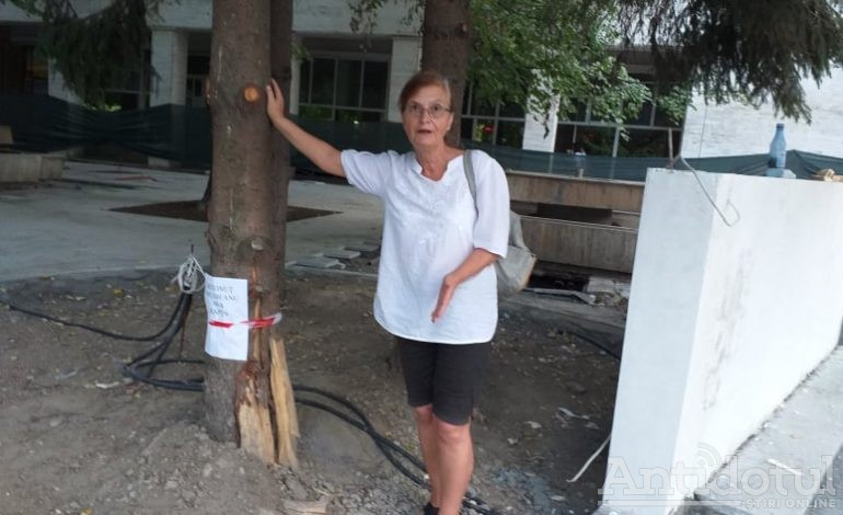 Revoltător: arborii de la Spicu și Romarta care au scăpat de drujba Primăriei, au început să se usuce