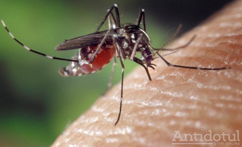 Vânătoarea de țânțari i-a trezit pe gălățeni cu noaptea în cap