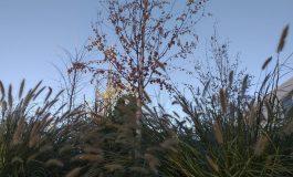 FOTO În centrul comunei Galați, vegetația crește de capul ei