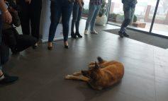 Unii latră cu folos. Câinii antrenați în scopuri terapeutice i-au scăpat de stres pe angajații unei companii din Galați