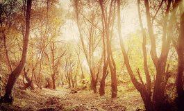 Acțiune inedită: mai mulți gălățeni vor să se retragă într-o pădure
