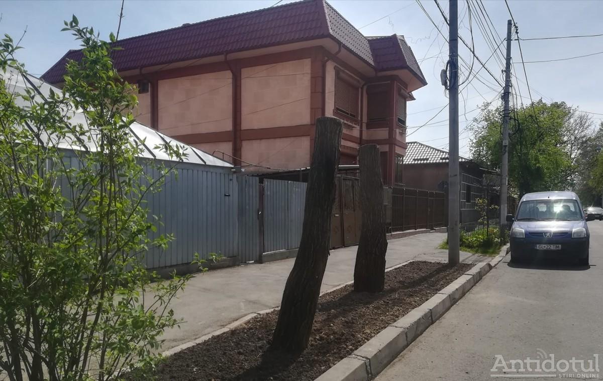 Model de toaletare marca Gospodărire Urbană