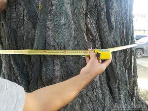 Copac tăiat de Gospodărire Urbană