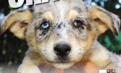 Campanie de sterilizare gratuită a câinilor din Galați