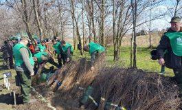 Guvernul le pune brăilenilor perdele de 1,5 milioane de euro