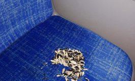 """Descoperire de """"senzație"""" într-un autobuz din Galați. Un articol interzis persoanelor sensibile și cu bun simț"""