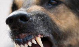 Incident groaznic la Galați: câinele bunicilor a sfâșiat nepotul de șase ani