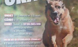 Campanie de sterilizare gratuită a câinilor maidanezi desfășurată cu sprijinul Ecosal