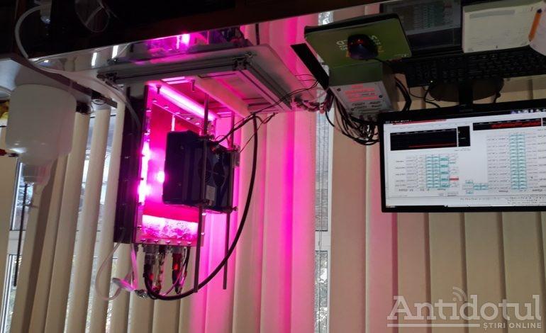 Cercetătorii de la UDJ au pregătit masa și combustibilul viitorului: alge ca la bunica