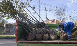 Primăria Galați anunță o amplă campanie de plantare de copaci
