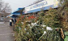 Crăciun pe stil prea vechi: mai mulți brazi împodobiți pot fi văzuți la Piața Centrală din Galați