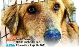 Campanie de sterilizare a animalelor de rasă comună