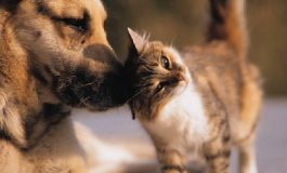 Câinele unui animal a omorât un cățel - VIDEO