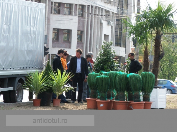Pitit după palmieri, primarul Nicolae ridică din umeri
