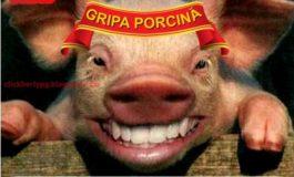 Am intrat în rîndul lumii: gripa porcină a ajuns la Galaţi
