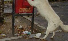 Javrele din Consiliul Local au aprobat o taxă pentru cîini