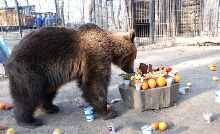 Concurs de belit banana la urs