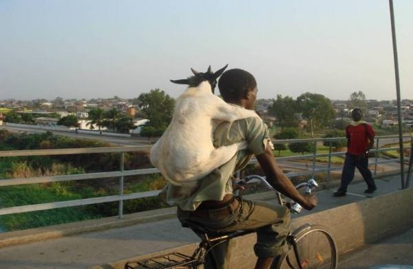 Graţie Transurb, în Galaţi se circulă ca în Africa