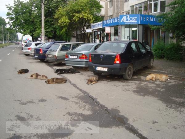 Prima parcare gratuită din Galați, păzită non-stop