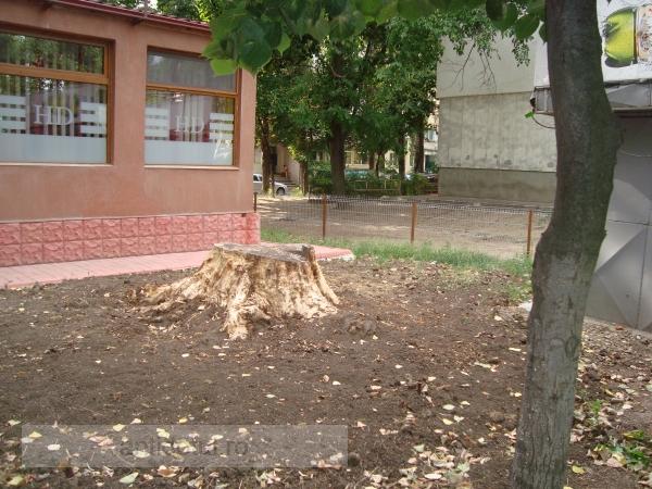 Mare chestie: s-a mai tăiat un copac pentru a face loc betoanelor unui jmeker