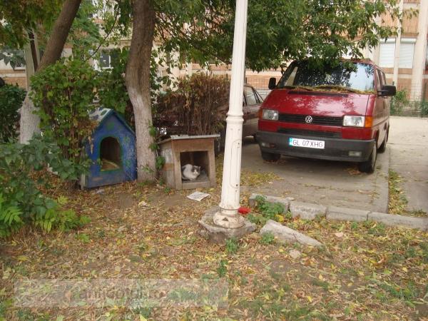 Prețioșii locatari din Centru cresc cîini în fața blocului