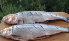 Nu cred că există un pește mai împuțit la gust decît scrumbia