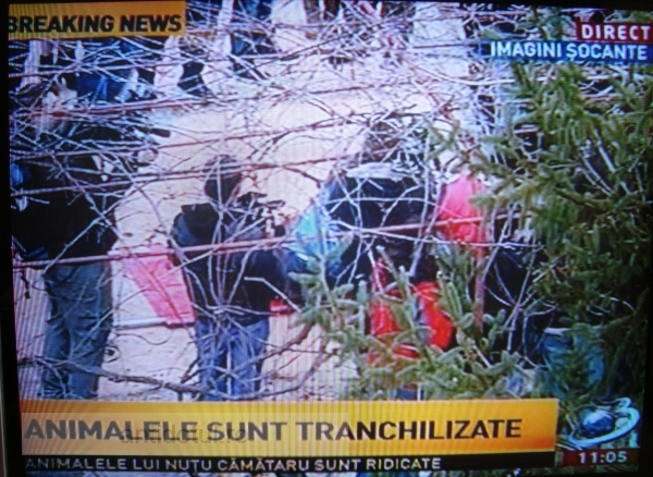 Antena 3 a primit interdicție de la Nuțu Cămătaru, așa că transmite din copaci