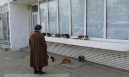 După cîini, babele nebune s-au apucat de crescut și pisici în fața blocului (video)