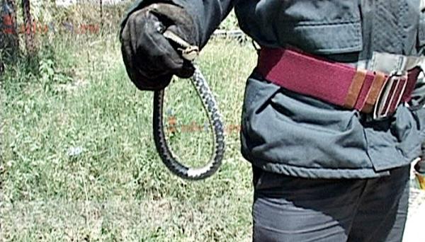 Mituri urbane: șarpele cu clopoței din Țiglina III