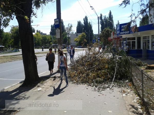 Nesimțire, ziua a 2-a. Muntele lui Eduard Grosu rezistă pe trotuar