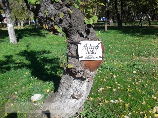Se dă un arbore din Grădina Publică. Identificați proprietarul