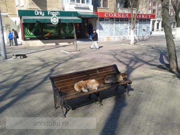 Maidanezii de la blocurile P de pe faleză au locuri rezervate pe bănci (foto)