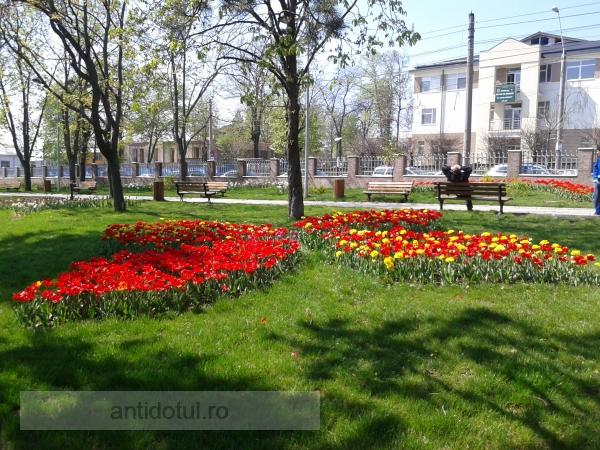 Minune într-un parc din Galați (foto)