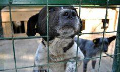 Taxă de 145 lei pentru adopția la distanță a cîinilor fără stăpîn. De două ori mai scumpă decît cea din București