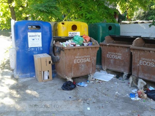 Blat urît mirositor între rromii de la Ecosal și țiganii care adună PET-uri (foto)