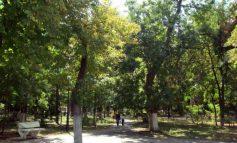 Primăria are preocupări de vacanță: numără boscheții din oraș