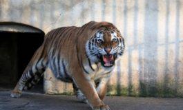 Măi animalelor, dați drumul la Grădina Zoologică Gârboavele!