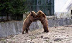 Zoo Gârboavele, bătaie de joc de 4,3 milioane de euro