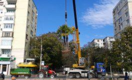 Palmierii au zburat de pe faleză (foto)