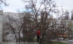 Pisică de rasă, captivă într-un copac. Operațiunea de salvare a eșuat (video)