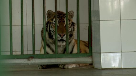 O veste bună pentru piața muncii din Galați: patrupedele de la Grădina Zoo Gîrboavele ies din șomaj
