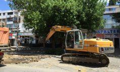 Uite ce duios mîngîie ăștia copacul cu excavatorul (video)