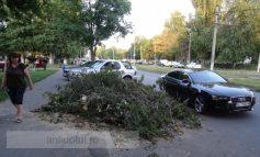 Un morman de crengi abandonate și un Audi lăsat intenționat pe banda întîi (foto)