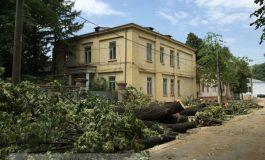 Cum de ce se taie copacii pe strada Mihai Bravu? Pentru că așa vor Primăria și Tancrad! (video)