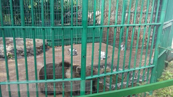 """Din ciclul să rîdem la zoo, astăzi episodul """"Miau băgat ăștia niște chiriași"""""""