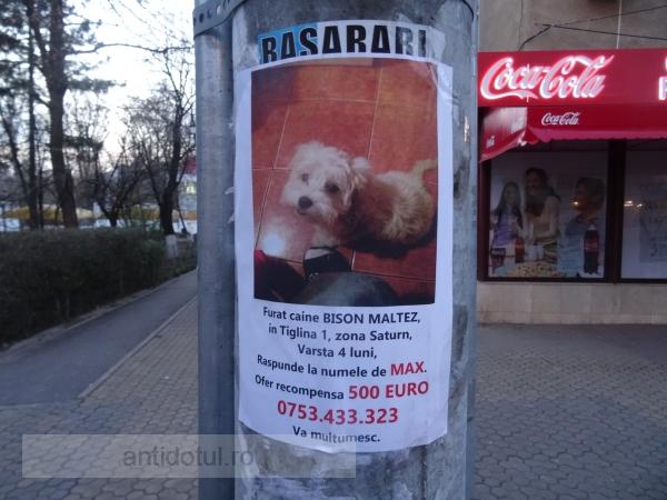 Cea mai mare recompensă oferită pentru un cățel furat în Galați (foto)