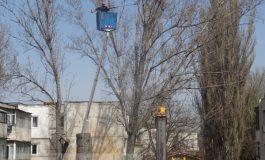 Galați, orașul în care sînt toaletați copacii, nu toaletele publice (foto)