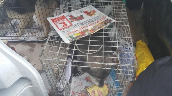Un biped fără milă ar putea ajunge la închisoare pentru că a maltratat trei patrupede