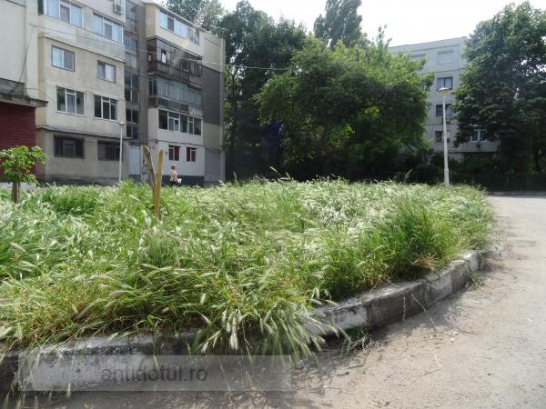 Oamenii numiți de Eugen Durbacă întrețin jungla urbană Galați (foto)